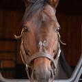 ロジユニヴァース「それでこそダービー馬なわけでありますよ」[191020優駿SS]