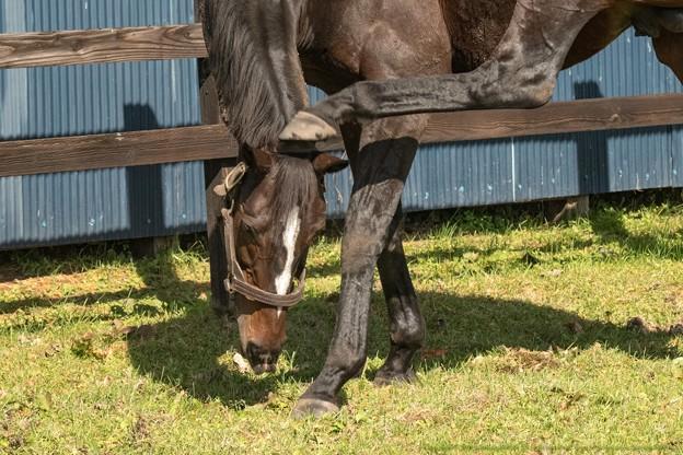 ワンアンドオンリー「誰から何と言われようともダービー馬だってかゆいときはかゆい」[191021アロースタッド]