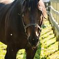Photos: レガーロ「日本のお馬さんもアグレッシブっすね」[191021レックススタッド] #見つめうま