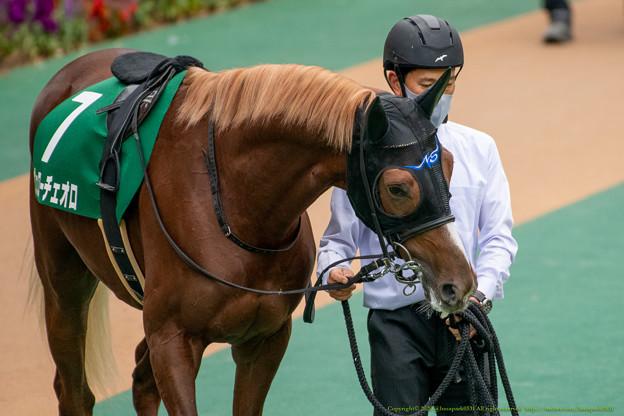 ヴェローチェオロ(1)【201123東京11R東スポ杯2歳S】