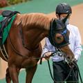 Photos: ヴェローチェオロ(1)【201123東京11R東スポ杯2歳S】