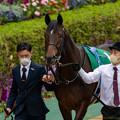 Photos: ドゥラヴェルデ(1)【201123東京11R東スポ杯2歳S】