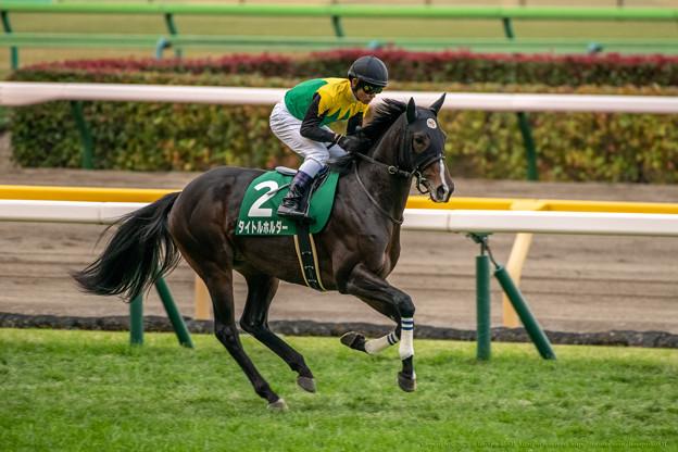 タイトルホルダー(3)【201123東京11R東スポ杯2歳S】