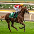 Photos: ヴェローチェオロ(3)【201123東京11R東スポ杯2歳S】