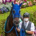 Photos: モリノカンナチャン(2)【201123東京11R東スポ杯2歳S】