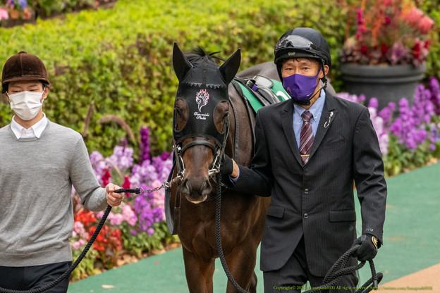 ジュンブルースカイ(2)【201123東京11R東スポ杯2歳S】
