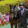 Photos: ジュンブルースカイ(2)【201123東京11R東スポ杯2歳S】