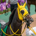 Photos: モメントグスタール(2)【201123東京11R東スポ杯2歳S】