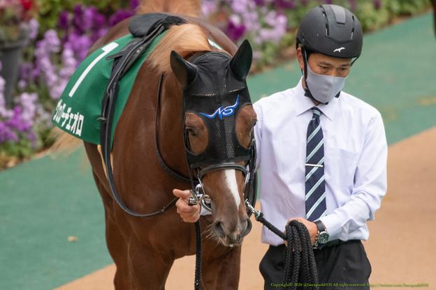 ヴェローチェオロ(2)【201123東京11R東スポ杯2歳S】