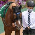 Photos: ヴェローチェオロ(2)【201123東京11R東スポ杯2歳S】