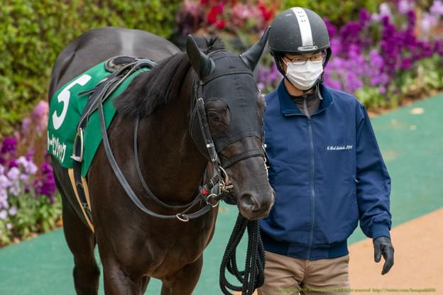 Photos: トーセンジャック(2)【201123東京11R東スポ杯2歳S】
