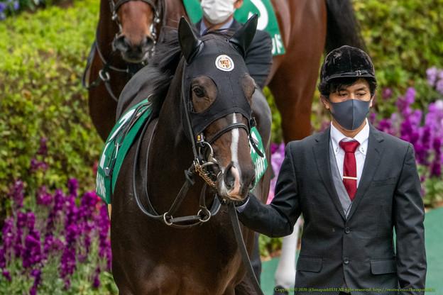 タイトルホルダー(2)【201123東京11R東スポ杯2歳S】