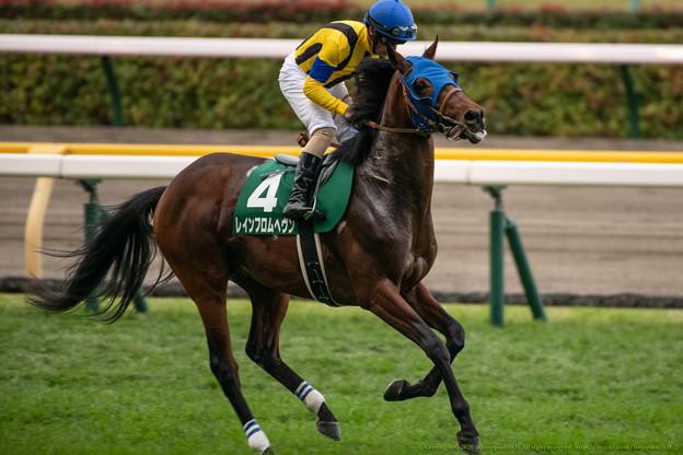 レインフロムヘヴン(3)【201123東京11R東スポ杯2歳S】