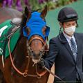 Photos: レインフロムヘヴン(2)【201123東京11R東スポ杯2歳S】