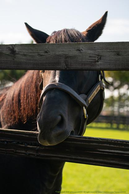 Photos: シャンハイボビー「やっぱりこのクールな眼でイチコロよ」(見えてません)[201016アロースタッド]