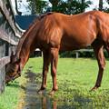 Photos: ネロ「脚が少し水に浸かるのも気持ちいいのよ」[201016アロースタッド]