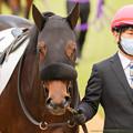 Photos: ラレイナ・パドック2[201206中山05R新馬戦]