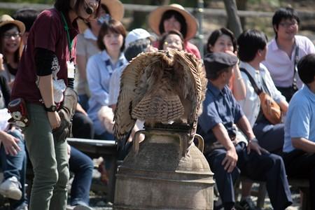 H25.9 掛川花鳥園 12