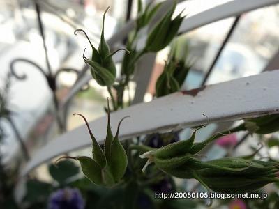 Photos: DSC09594