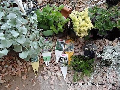 Photos: 2013年春のお花