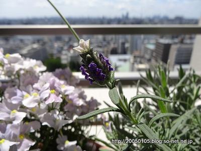 Photos: DSC00606