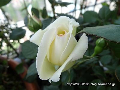 Photos: DSC00767