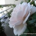 Photos: DSC01110