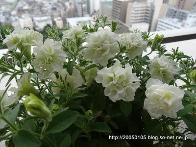Photos: DSC01389