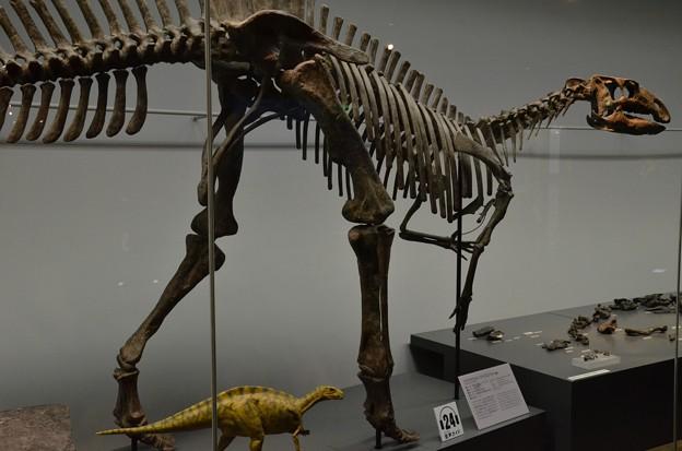 福井産:フクイサウルス・テトリエンシス(複製)