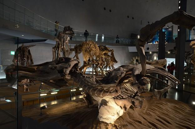 恐竜のミイラ(複製)