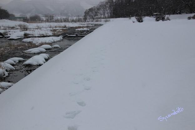 Photos: 足跡