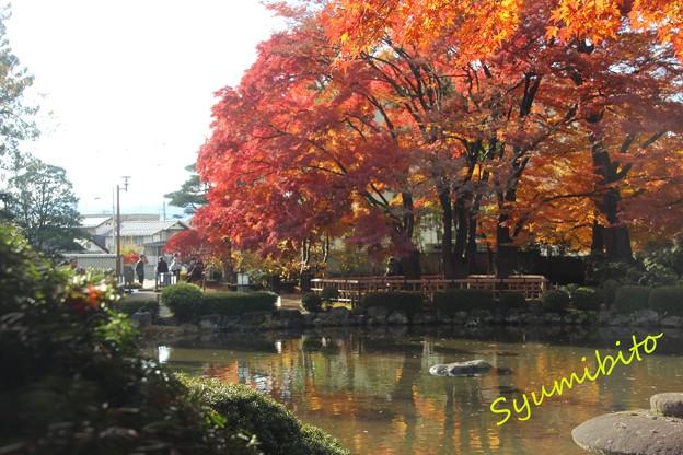 Photos: もみじ公園
