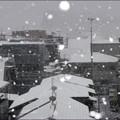 <2013年1月14日 Tokyo /雪>
