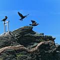 Photos: 『神出ずる鳥』 ~夫婦岩~