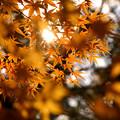 『木漏れ日。。。』 ~熱田神宮~