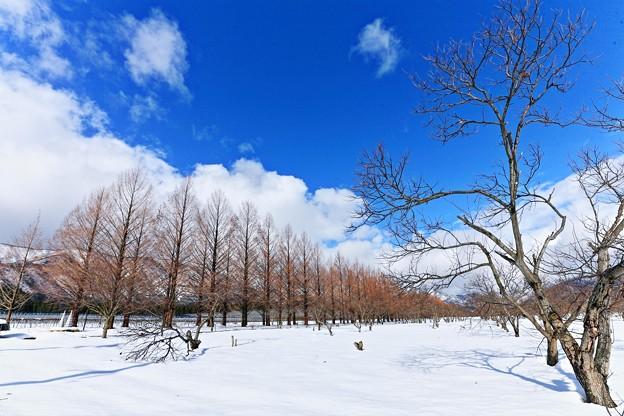 写真: 『寒颯。。。』