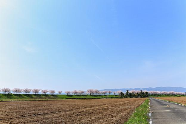写真: 『春閑。。。』