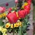写真: 『春の赤』