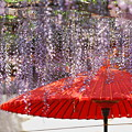 Photos: 『日本の初夏。。。』 ~天王川公園~