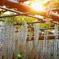 『初夏の夕暮れ。。。』 ~曼荼羅寺~