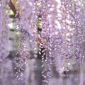 Photos: 『柔らかな陽射し。。。』 ~天王川公園~