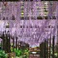 『初夏の訪れ』 ~天王川公園~