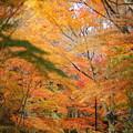 写真: 『秋の回廊』
