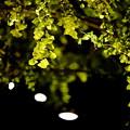 『秋燈。。。』