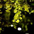 『浮かぶ黄葉』