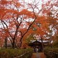 来迎寺の紅葉園