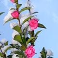 いろいろな花