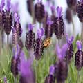 蜂達の楽園