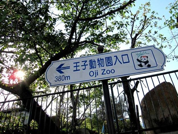 写真: パンダといえば王子動物園