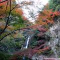 写真: 紅葉 2013.12.01